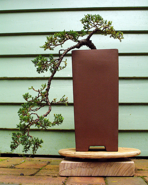 Picture Of A Cascade Style Bonsai Tree