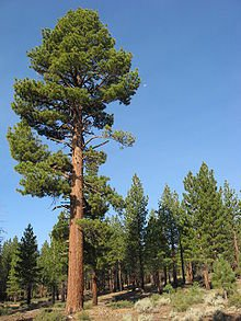 Tree Names, List of Common and Botanical Types of Trees with