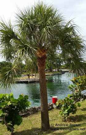 Palm Trees List Of Types And Names